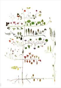 ポスター 北欧 草木の標本 ボタニカル アート MULTI TREE サイズ 50x70cm 北欧 ポスター おしゃれ インテリア タペストリー 新生活 模様替え デザイン ナチュラル 高級感 壁かけ 素材