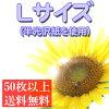 【Lサイズ】デジカメプリントデジタルプリント写真プリントデジカメ写真ネットプリント写真写真注文デジカメ(アルバムかわいいスクラップパーツ)