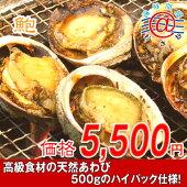 【お買い得】美味しさ新鮮!ブライン凍結!「冷凍あわび500g」3/4個