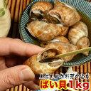 高知県の郷土料理