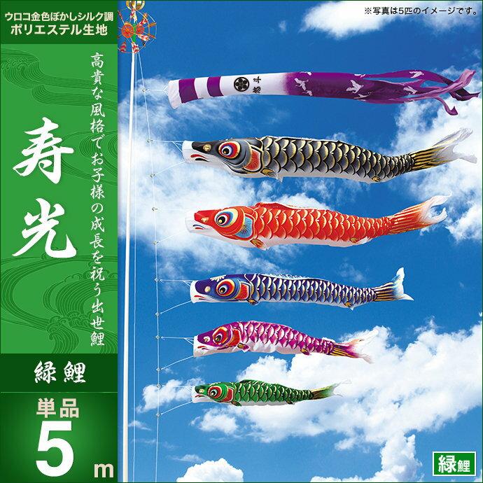 寿光-緑鯉5m・単品