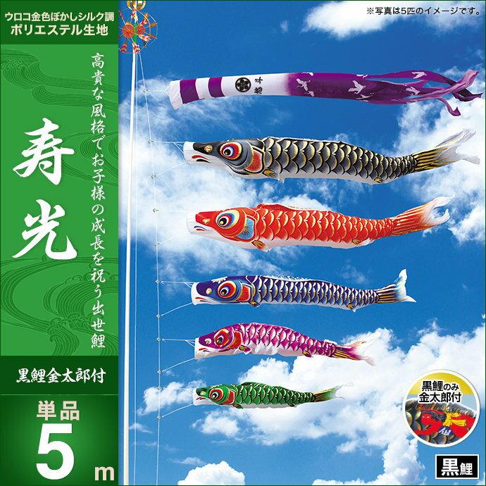 寿光-黒鯉(金太郎付)5m・単品