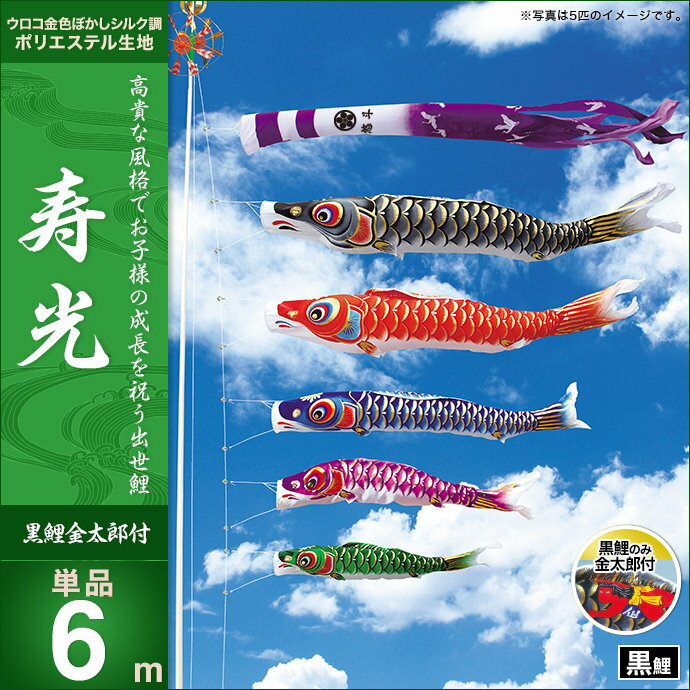 寿光-黒鯉(金太郎付)6m・単品