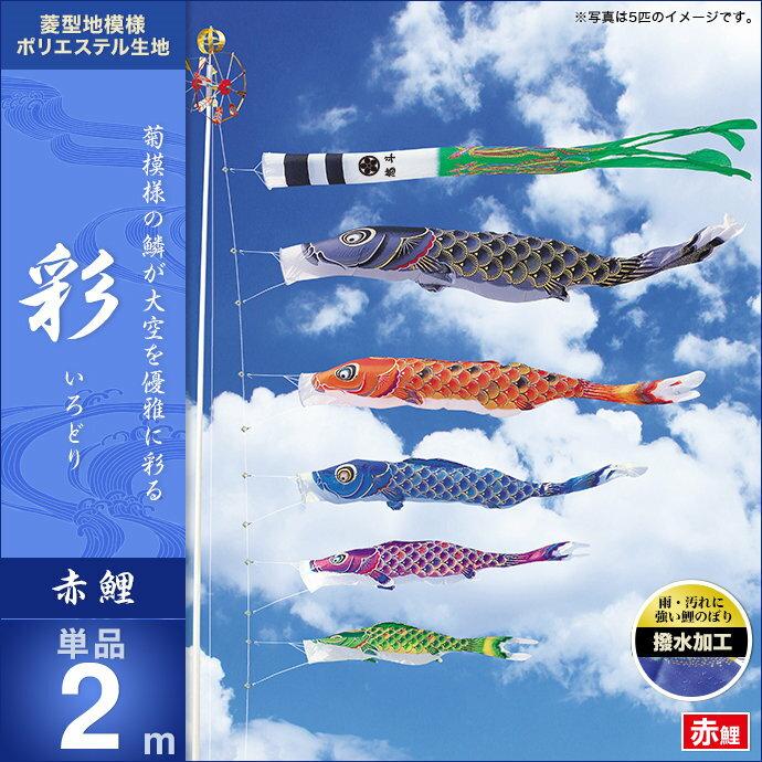 彩-赤鯉2m・単品