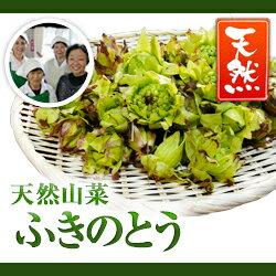 天然山菜ふきのとう