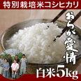 新潟県産コシヒカリ/特別栽培米/新潟産コシヒカリ/