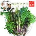 【2021年予約開始!】1kg天然山菜おまかせセット (採取者・笑顔の里)送料無料天然山菜セット/新潟県魚沼産