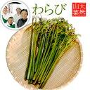 【2020年予約】【天然山菜】わらび 1kg(採取者・笑顔の...