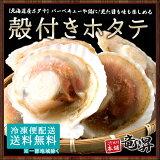 殻付きホタテ(ホタテ片貝(8枚入)×2)バーベキューにぴったり送料無料[貝帆立ほたて北海道産送料無料冷凍]
