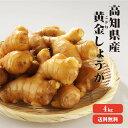 【送料無料】高知県産 黄金生姜 4Kg |生姜 国産 黄金しょうが 酢しょうが しょうが 紅茶 ショウガ 生姜 保存 生姜 生姜 効能 根生姜