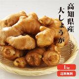 【送料無料】高知県産 大生姜(おおしょうが) 1kg |生姜 国産 大しょうが 酢しょうが しょうが 紅茶 ショウガ 生姜 保存 生姜 生姜 効能 根生姜