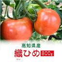 高糖度フルーツトマト 織ひめ 800g  高知 特産 送料発生