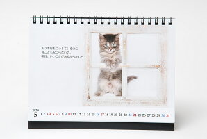 『猫様のお言葉』卓上カレンダーネ・コ・ト・バ(文:志茂田景樹/2020年版)