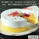 【とろける苺のショートケーキ (直径11.5cm)】 国産い
