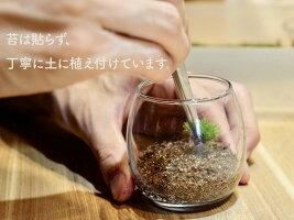 おちょこけ_家とヤギ【苔テラリウム(コケリウム)】