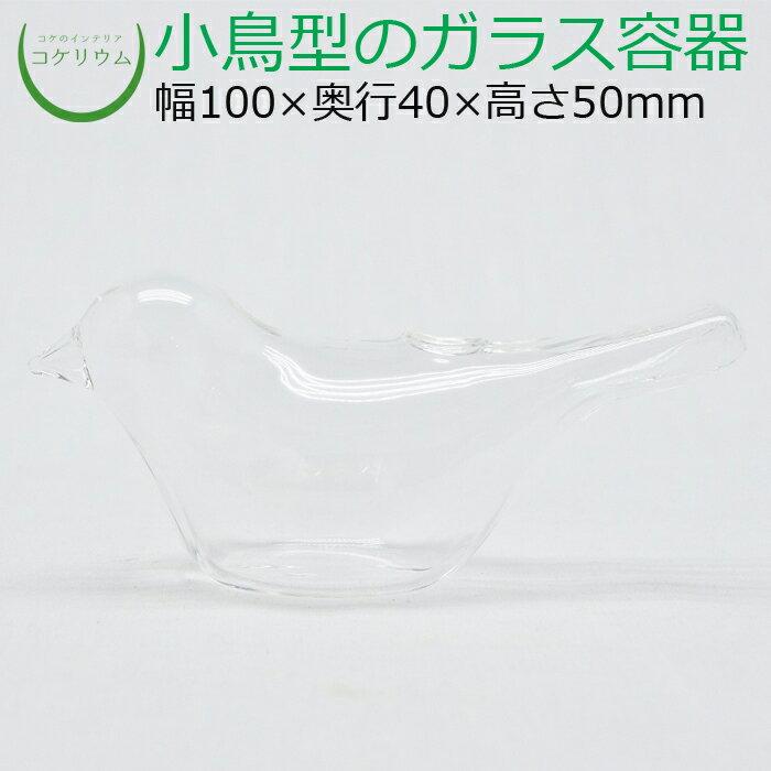 コケリウムガラス容器 小鳥