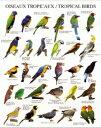 ミニポスター(台紙付)Tropical Birds