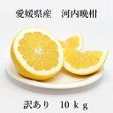 【送料無料】河内晩柑 訳あり 10kg サイズ4L-3S