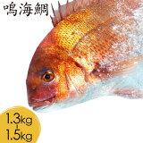 鳴門の鯛「鳴海鯛」切り分けて発送で 届いてすぐに調理できて便利!美味しい徳島県 鮮魚 グルメ 高級 鳴門鯛 贈り物 切り分け 捌き済み 調理不要 送料無料 真空パック