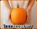 ハロウィンパーティーの演出・ランタン作りにハロウィンかぼちゃ Sサイズ ジャックオーランタ...