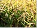 23年産とっても大きな米粒 高級すし米 岐阜はつしも玄米5kg