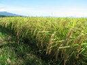 ●激安●23年産国産最高級産地福島県会津喜多方産ミルキークィーン玄米10kg【送料無料】