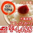 【29年産】千葉県産菜の花こしひかりつきたて白米10kg(5kg×2)※送料無料※※送料無料地域に除外があります※北海道・九州:+400円