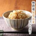 発芽玄米無農薬1