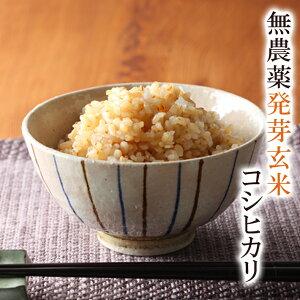 発芽玄米 令和2年福井県産送料無料 無農薬・無化学肥料栽培無農薬コシヒカリ「特選」食物繊維・ビタミンB群・GABAが豊富アブシジン酸は検出されませんでした!限定米 2kgフレッシュ真空パックでお届け 米・食味鑑定士認定米
