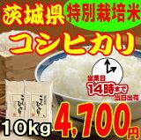 29年度産 茨城県産コシヒカリ10kg(5kg×2)