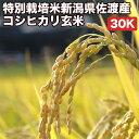 特別栽培米新潟県佐渡産コシヒカリ玄米30Kお米【選べる搗き方白米・ハイガ米・玄米・8分つきなど】完全真空包装米(真空包装代 無料)長期保存・鮮度維持・カビ、害虫などの繁殖 防止に♪美味しいご飯。贈り物にも。