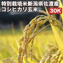 特別栽培新潟県佐渡産コシヒカリ