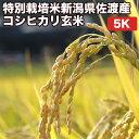 【8/1(土)09:59まで エントリーでP10倍】特別栽培...