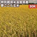 特別栽培米滋賀県産夢ごこち玄米30Kお米【選べる搗き方白米・ハイガ米・玄米・8分つきなど】完全真空包装米(真空包装代 無料)長期保存・鮮度維持・カビ、害虫などの繁殖 防止に♪美味しいご飯。贈り物にも。