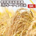 特別栽培滋賀県産ミルキークイン玄米5Kお米【選べる搗き方白米・ハイガ米・玄米・8分つきなど】完全真空包装米(真空包装代 無料)長期保存・鮮度維持・カビ、害虫などの繁殖 防止に♪美味しいご飯。贈り物にも。