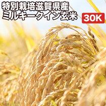 特別栽培滋賀県産ミルキークイン玄米30K