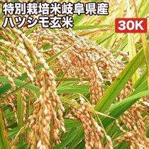 特別栽培米岐阜県産ハツシモ玄米30K