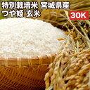 特別栽培米宮城県産つや姫玄米30Kお米【選べる搗き方白米・ハイガ米・玄米・8分つきなど】完全真空包装米(真空包装代 無料)長期保存・鮮度維持・カビ、害虫などの繁殖 防止に♪美味しいご飯。贈り物にも。