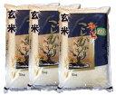 令和元年産【玄米】新潟県産特選コシヒカリ15kg(5kg×3袋)【あす楽対応】