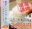 29年産千葉県産ふさこがね 10kg 太陽の恵たっぷりつやつや!!【送...