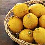 ★国産レモン★農家が家用に栽培したレモン2kg