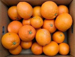 家庭用ブラッドオレンジ3kg
