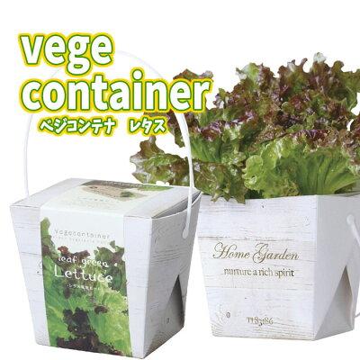 おうち時間 野菜 植物 育てる 栽培キット インテリア 趣味 自由研究 レタス