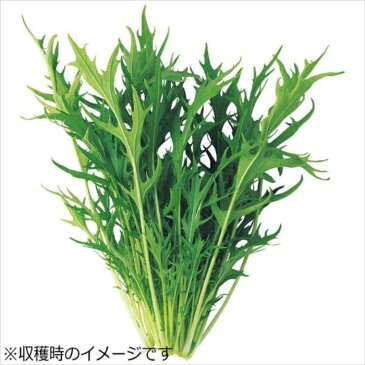 水耕栽培器 Green Farm グリーンファーム 水耕栽培種子 水菜 5袋セット ユーイング UH-LB02-5SET