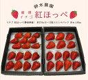 【がんばろう!静岡対象商品】「紅ほっぺ」いちご約270g×4P 計1.1kg(要冷蔵)(1パック6〜11粒入り)