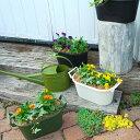 【送料無料】ビオラとアイビーの寄せ植え寄せ植え アイビー ビオラ ガーデニングおしゃれな寄せ植え