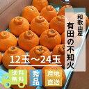 和歌山県産 有田の不知火(しらぬひ)(12玉〜24玉)