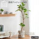 【全品5%OFF 25日24h限定】【観葉植物 指宿アルテシ
