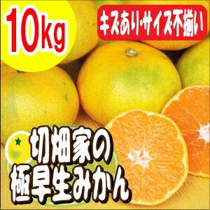 【送料無料】和歌山県産みかん♪程よい酸味と程よい甘み!キズありでもお味はそのまま、切畑家...