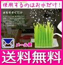 【レビューを書いてメール便送料無料】自然気化式加湿器「Moistyplants」「モイスティプランツ」自然気化式加湿器